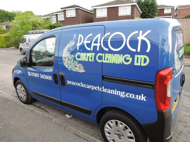 Peacock Carpet Cleaning